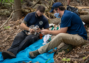 Mass Fish and Wildlife staff tagging peregrine falcon chick in Western MA.